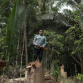 Karipuna Territory in Brazil. Indigenous Karipuna Aripã standing on a cut trunk in a deforested area inside the Karipuna reserve. Ratified in 1998, the Karipuna Indigenous Territory (IT) is 152,930 ha in size and suffers from constant invasions of illegal loggers. Today the Karipuna territory is facing one of the highest rates of deforestation of all indigenous areas in the Amazon.